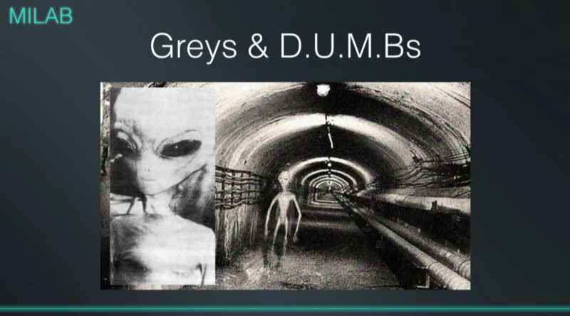 5 Greys And DUMBS